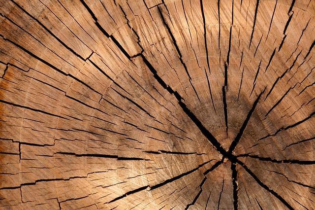 dřevi